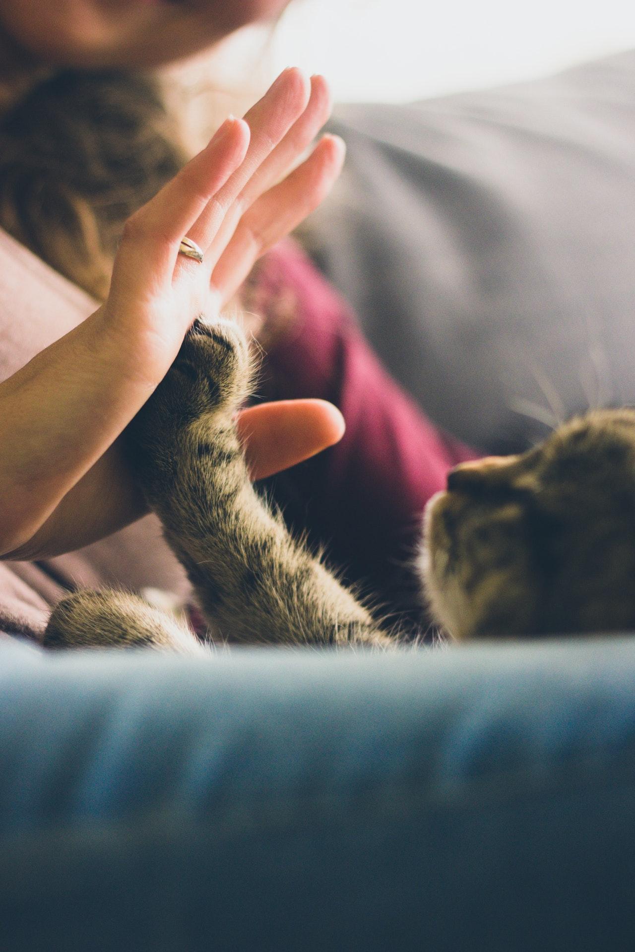 Jakich mokrych karm dla kota unikać?